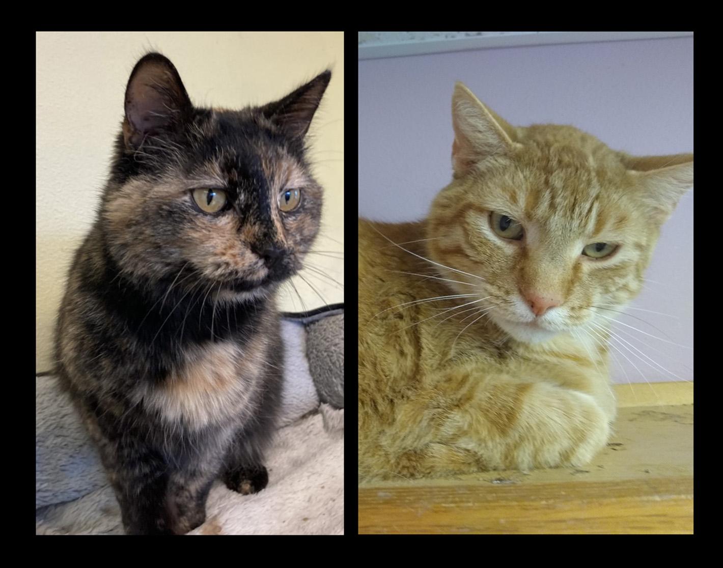Frankie & Miss Kitty